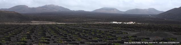 Lanzarote vines in volcanic soils.